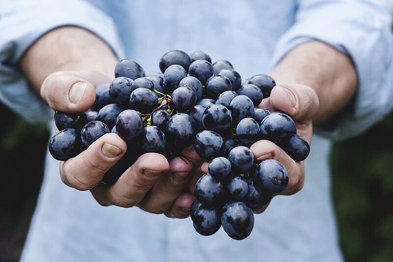 La Gourmandière, dégustation de vins à la cave et la boutique de Francueil